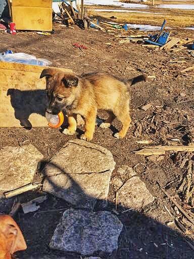 landfill_puppy_IMG_8418